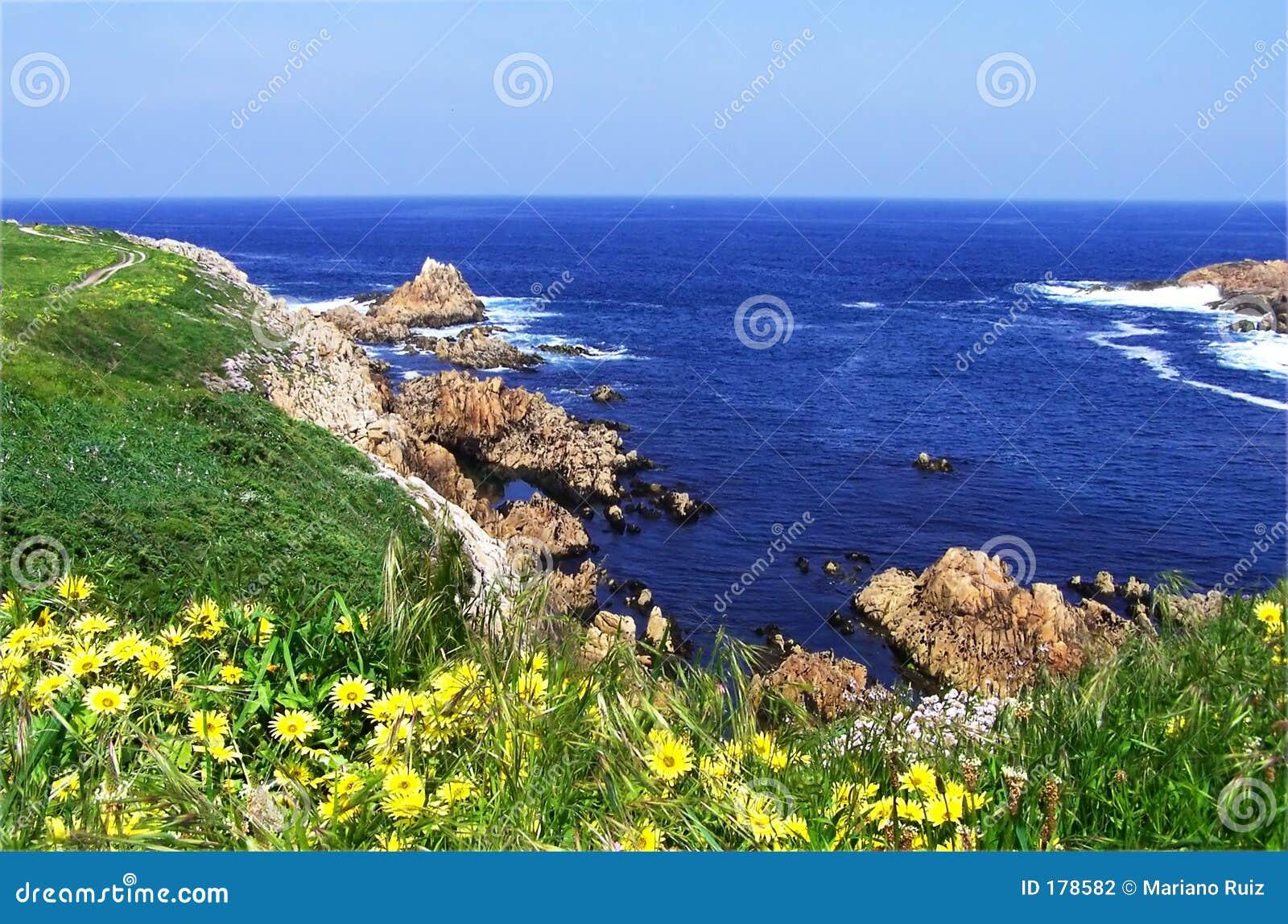 Las flores amarillas en una hierba cubrieron el acantilado