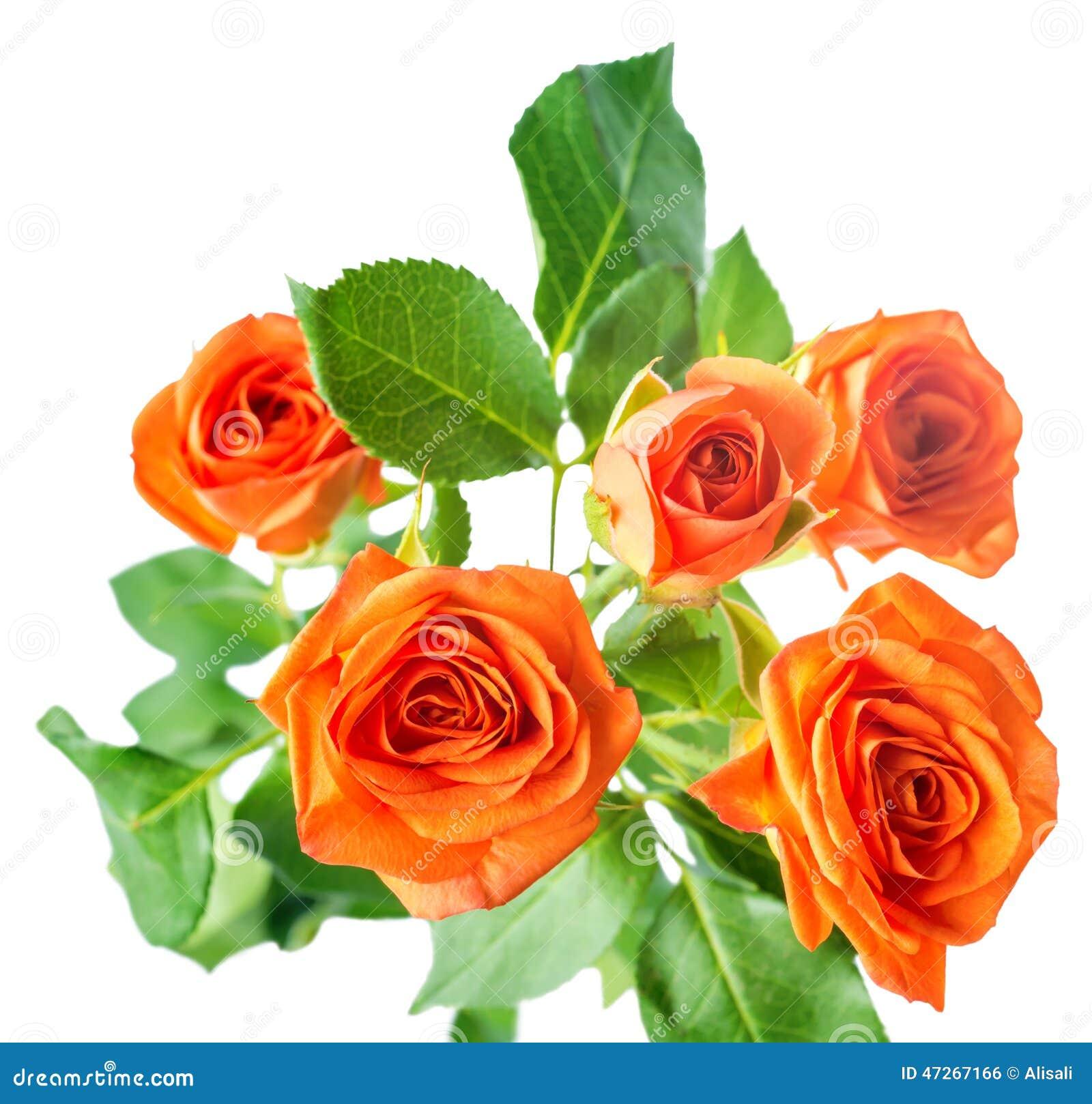 Hoja de Rose foto de archivo. Imagen de rose, solo, fondos - 41743142
