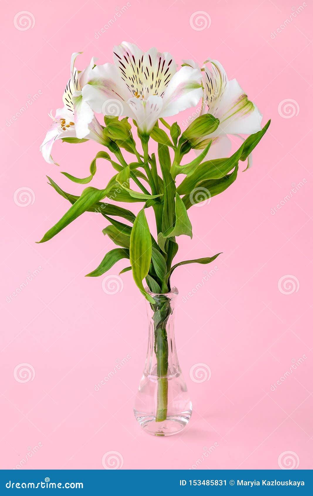 Las flores blancas del alstroemeria, llamaron comúnmente el lirio peruano o el lirio de los incas en un pequeño florero de crista