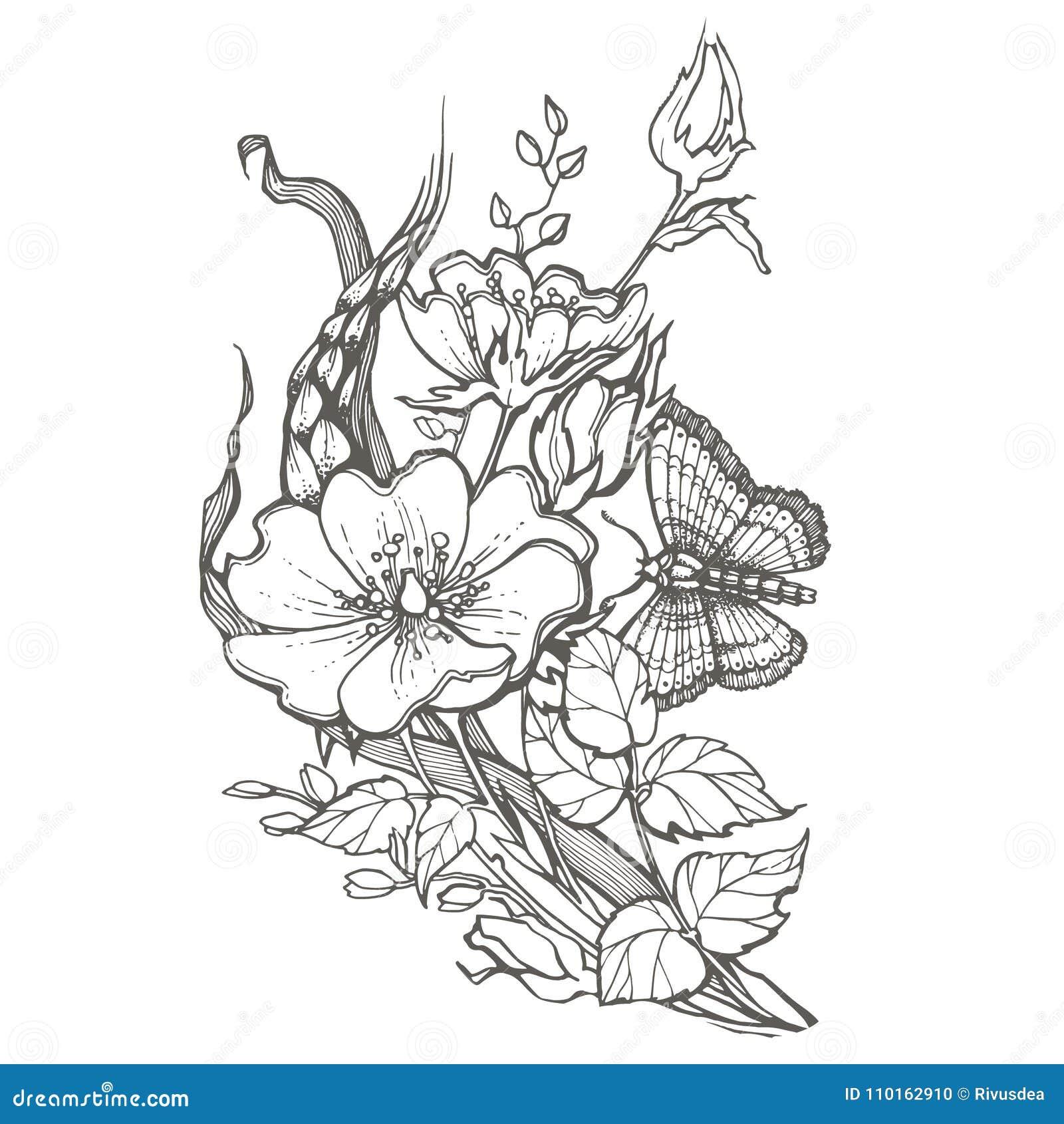 Las Flores Color De Rosa Del Perro Salvaje Con El Dibujo De