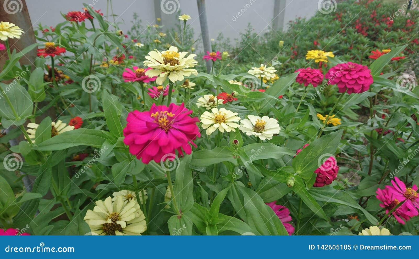 Las flores crecen de suelo natural