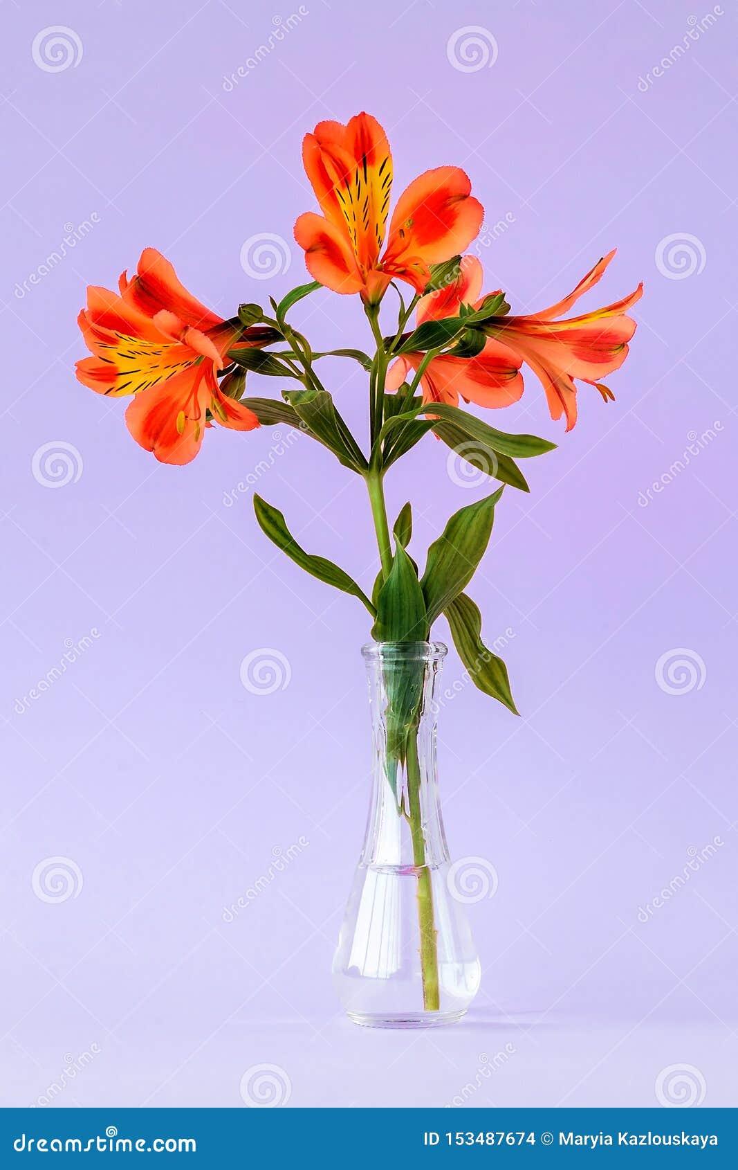 Las flores de color naranja del alstroemeria, llamaron comúnmente el lirio peruano o el lirio de los incas en un pequeño florero