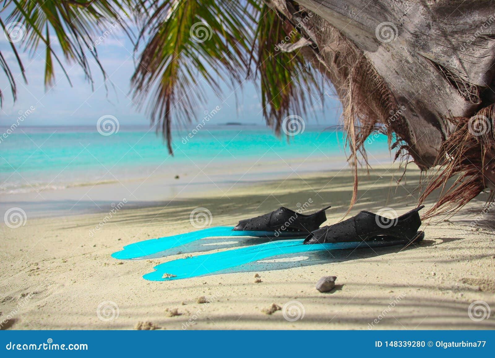 Las flores de los frangipany ex?ticos rosados en un primer de la palmera en la playa de la isla tropical