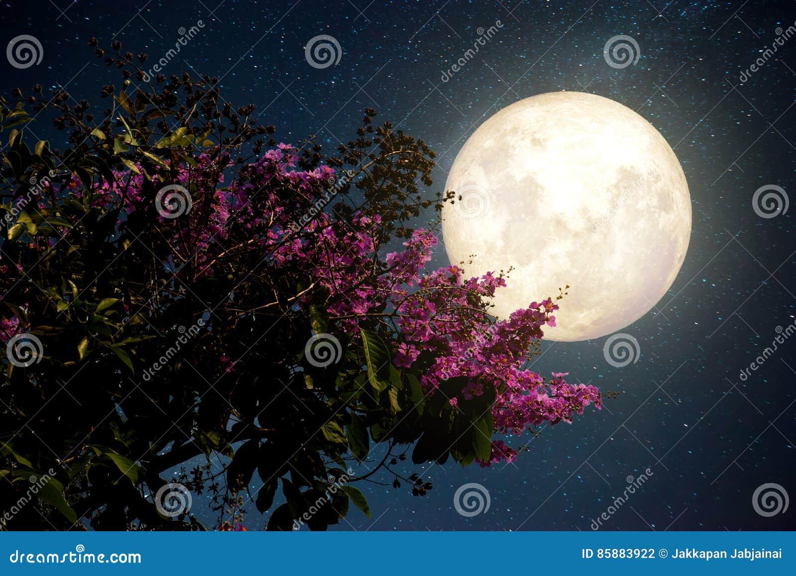 Las flores hermosas de Sakura de la flor de cerezo con la vía láctea protagonizan en cielos nocturnos; Luna Llena