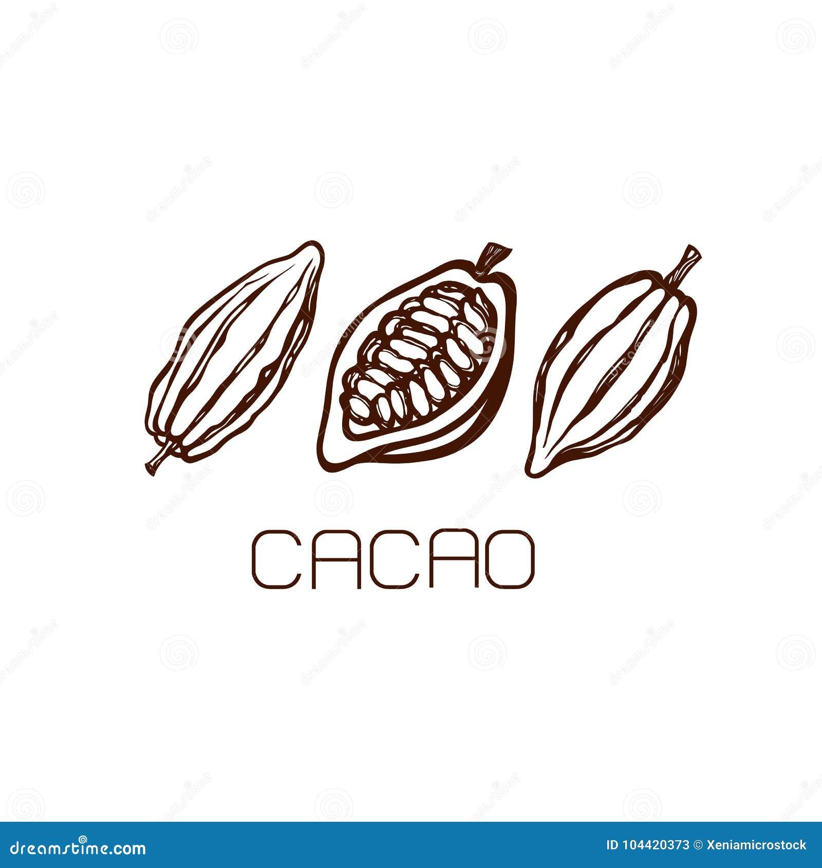 Las frutas de los granos de cacao conjunto Mano drenada label LOGOTIPO