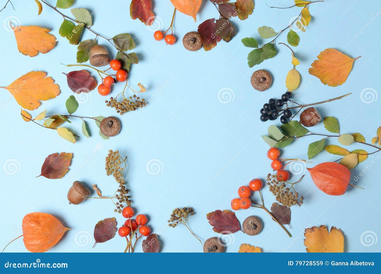 Las hojas de otoño amarillas brillantes, las castañas, los conos del pino y el physalis anaranjado florece en un fondo azul con e