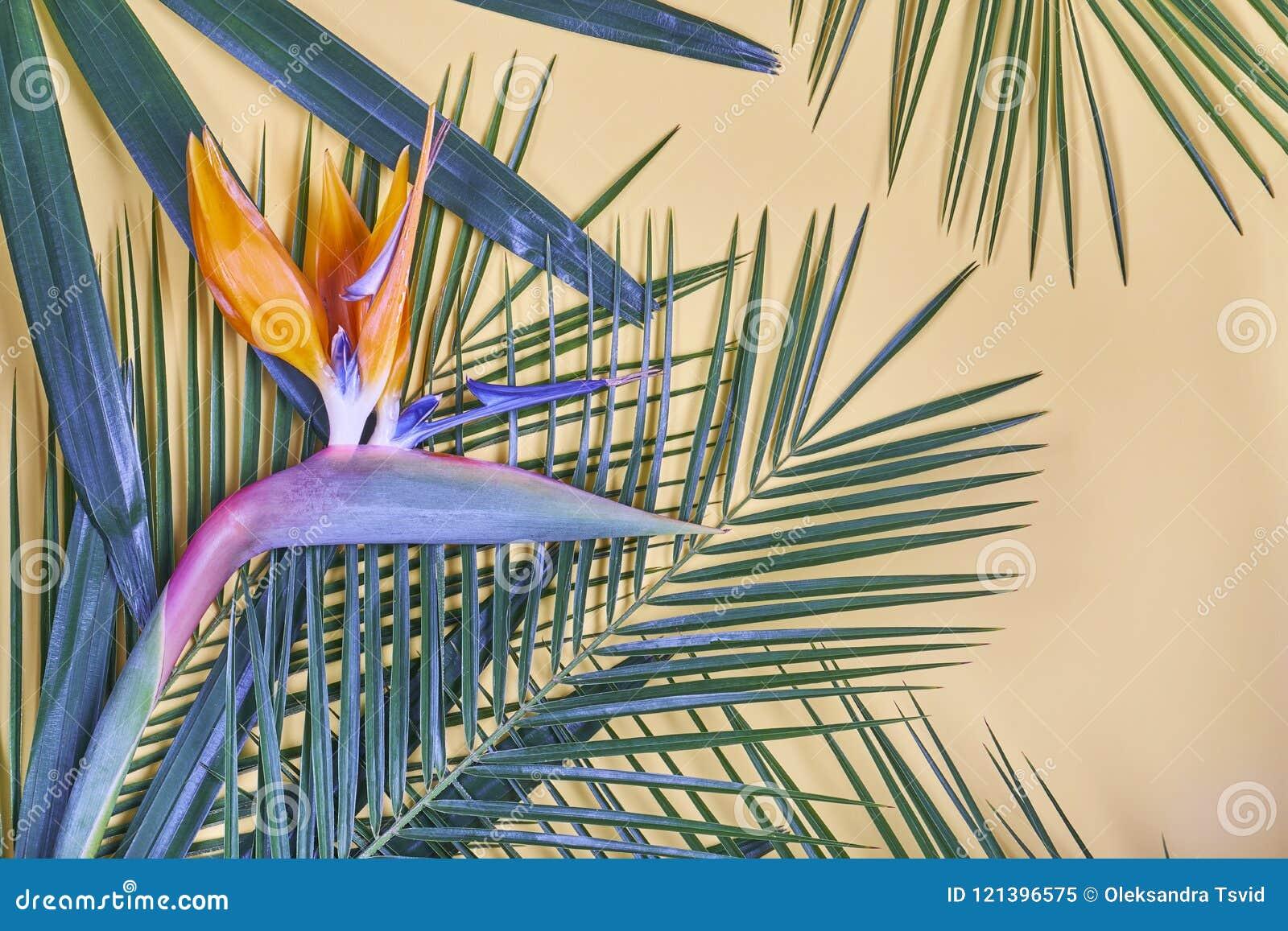 Las hojas de palma y la ave del paraíso tropicales florecen en fondo en colores pastel