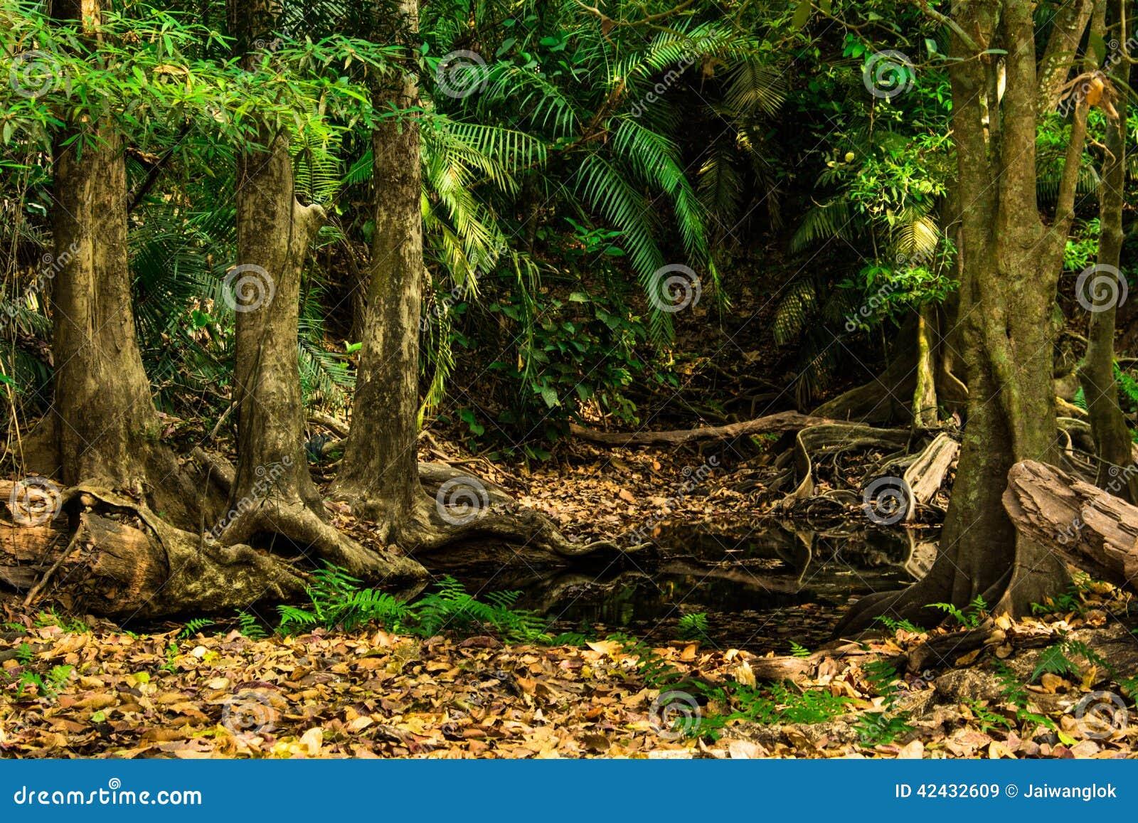 Las hojas del marrón en el bosque