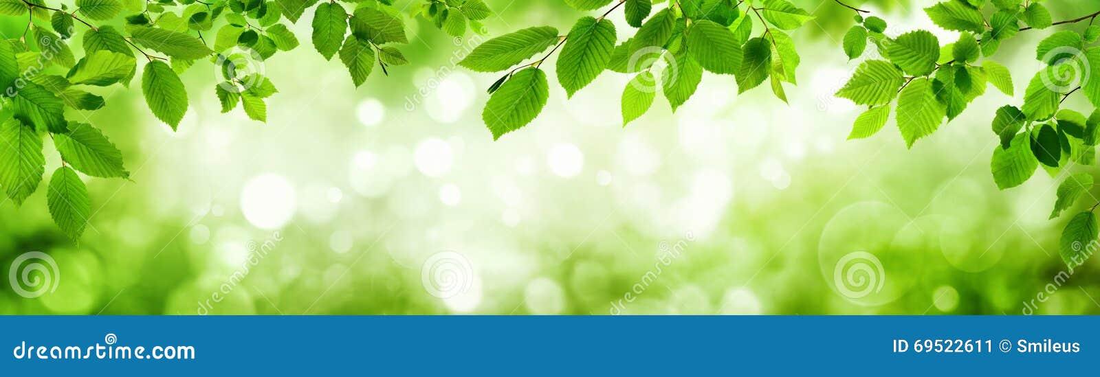 Las hojas del verde y los puntos culminantes borrosos construyen un marco