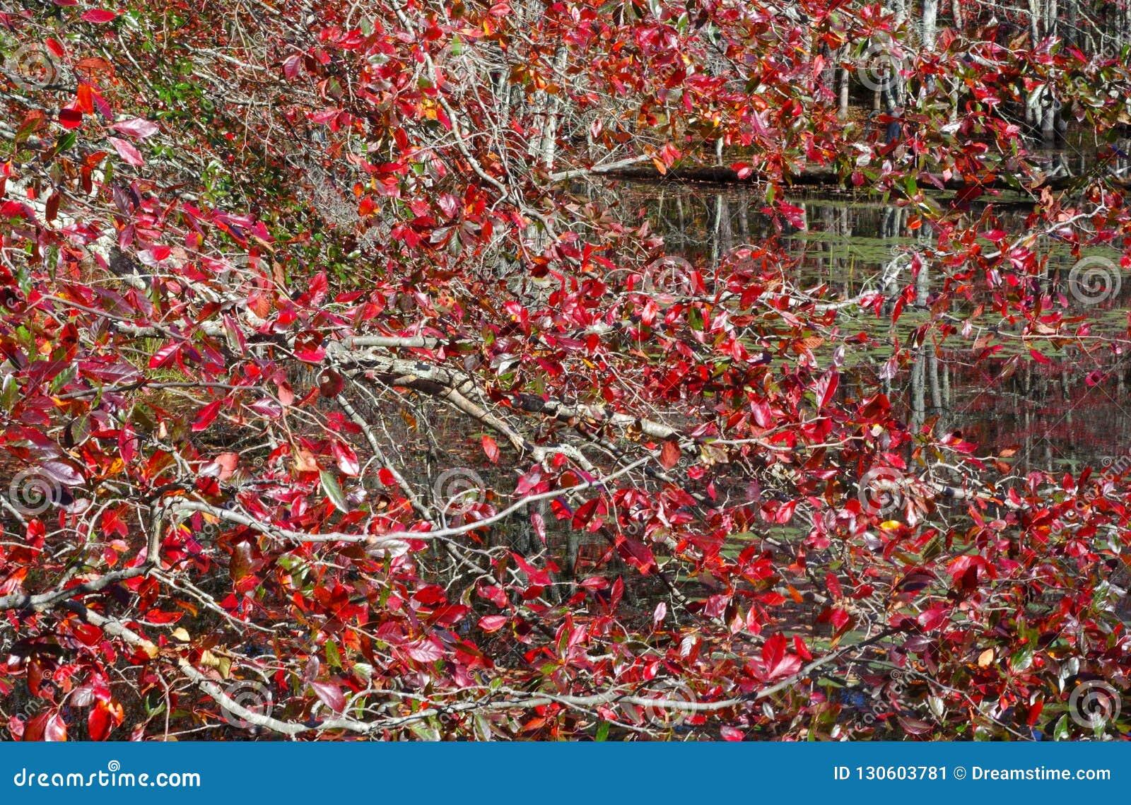 Las hojas están dando vuelta a rojo ardiente