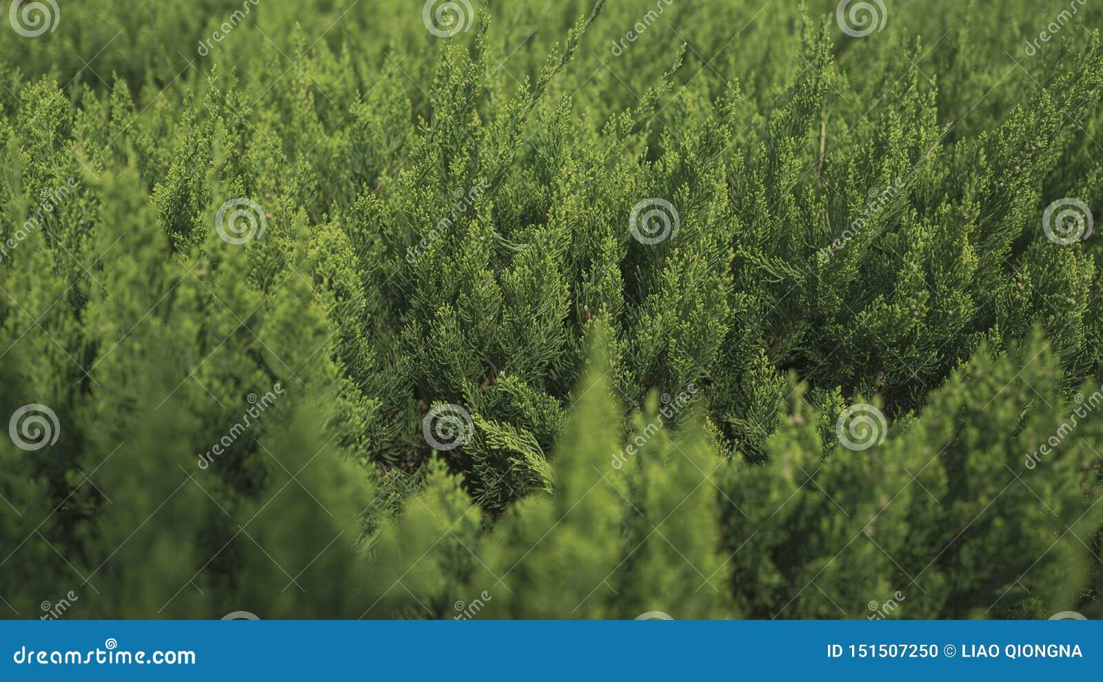 Las hojas verdes, fondo que empaña