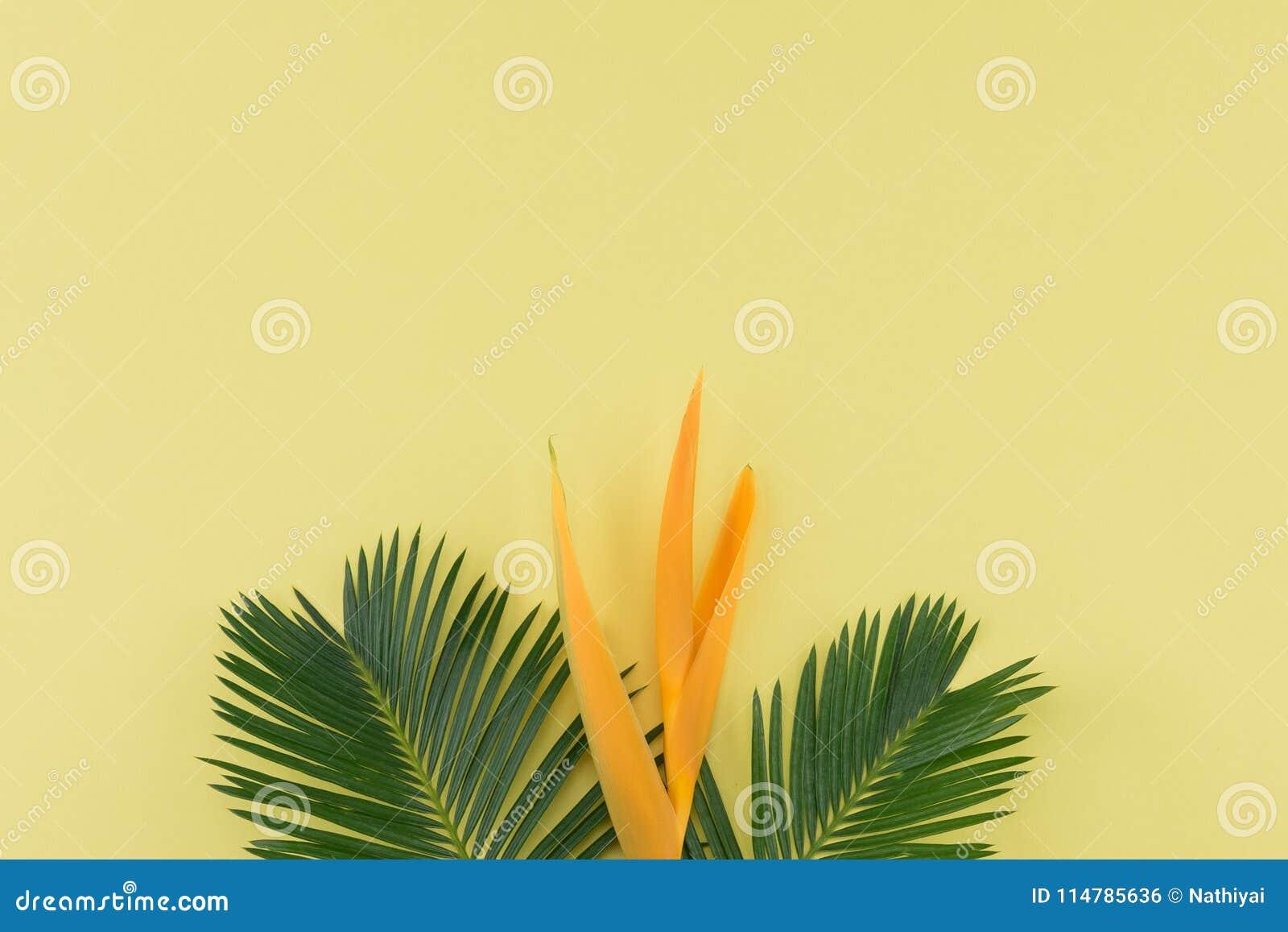 Las hojas y la ave del paraíso del helecho florecen en fondo amarillo en colores pastel