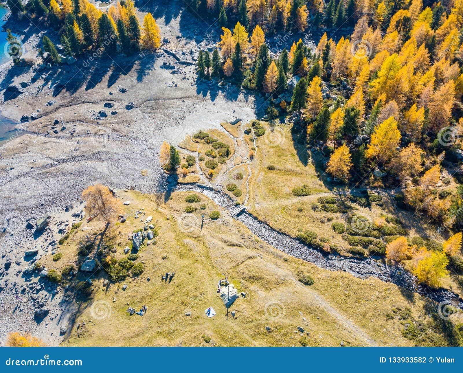 Las i bagna w złotym sezonie jesiennym w Lagh da Val altówce