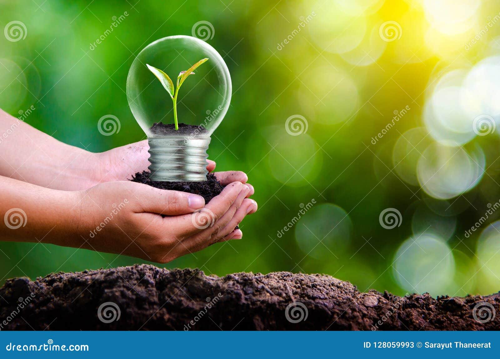 Las i drzewa jesteśmy w świetle Pojęcia środowiskowej konserwaci i globalnego nagrzania rośliny dorośnięcie wśrodku lampowego bul
