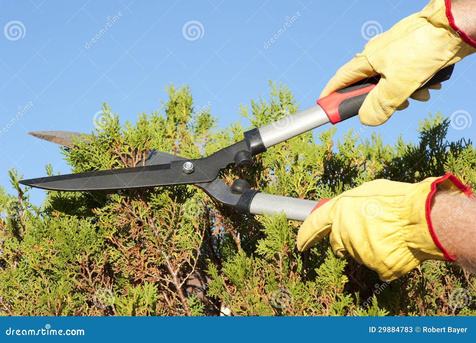 Fondo del cielo del seto de la poda del trabajo del jard n for Trabajo jardinero