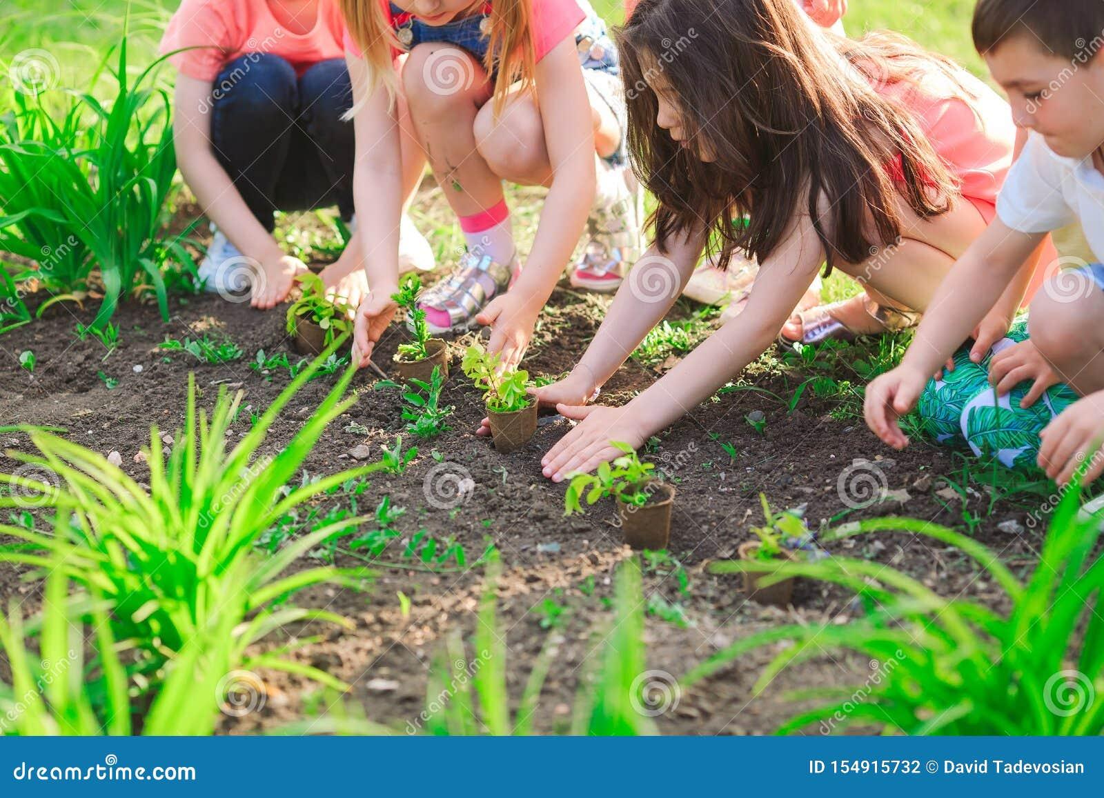 Las manos de los niños que plantan el árbol joven en suelo negro junto como el concepto del mundo de rescate