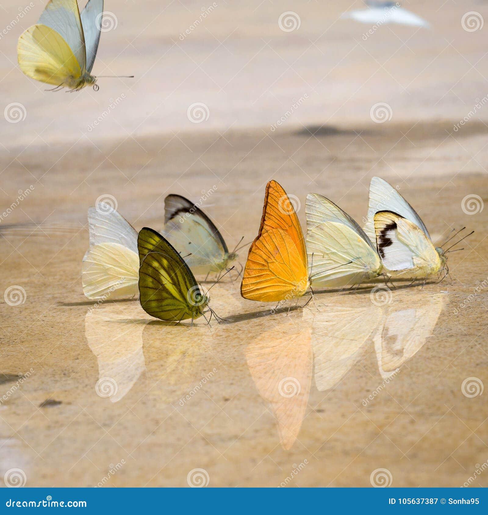 Las mariposas aparecen temprano en el verano