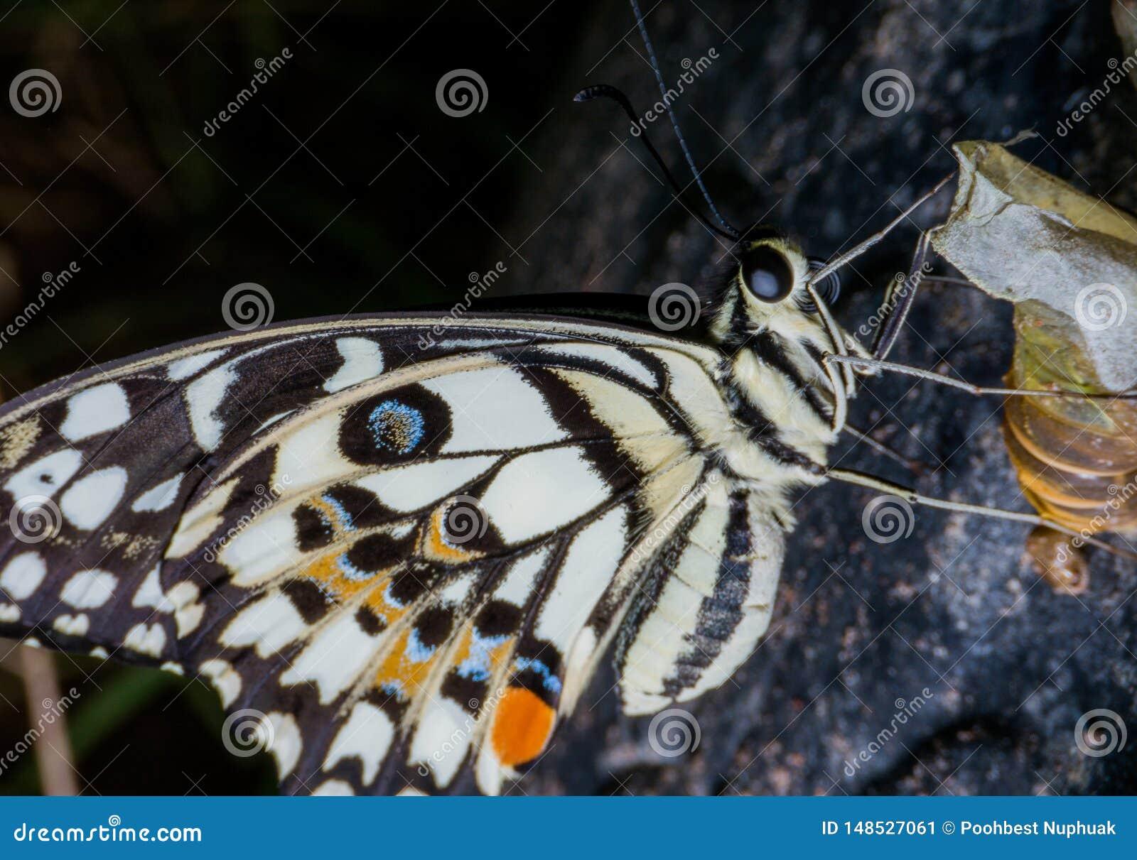 Las mariposas son los insectos que ayudan a polinizar las flores