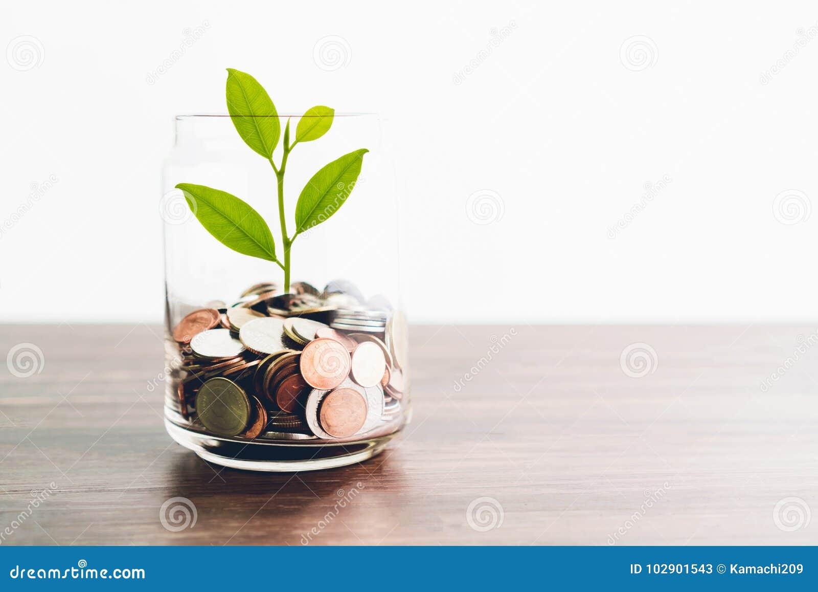 Las monedas en una botella y el árbol verde, representan el crecimiento financiero Más dinero que usted ahorra