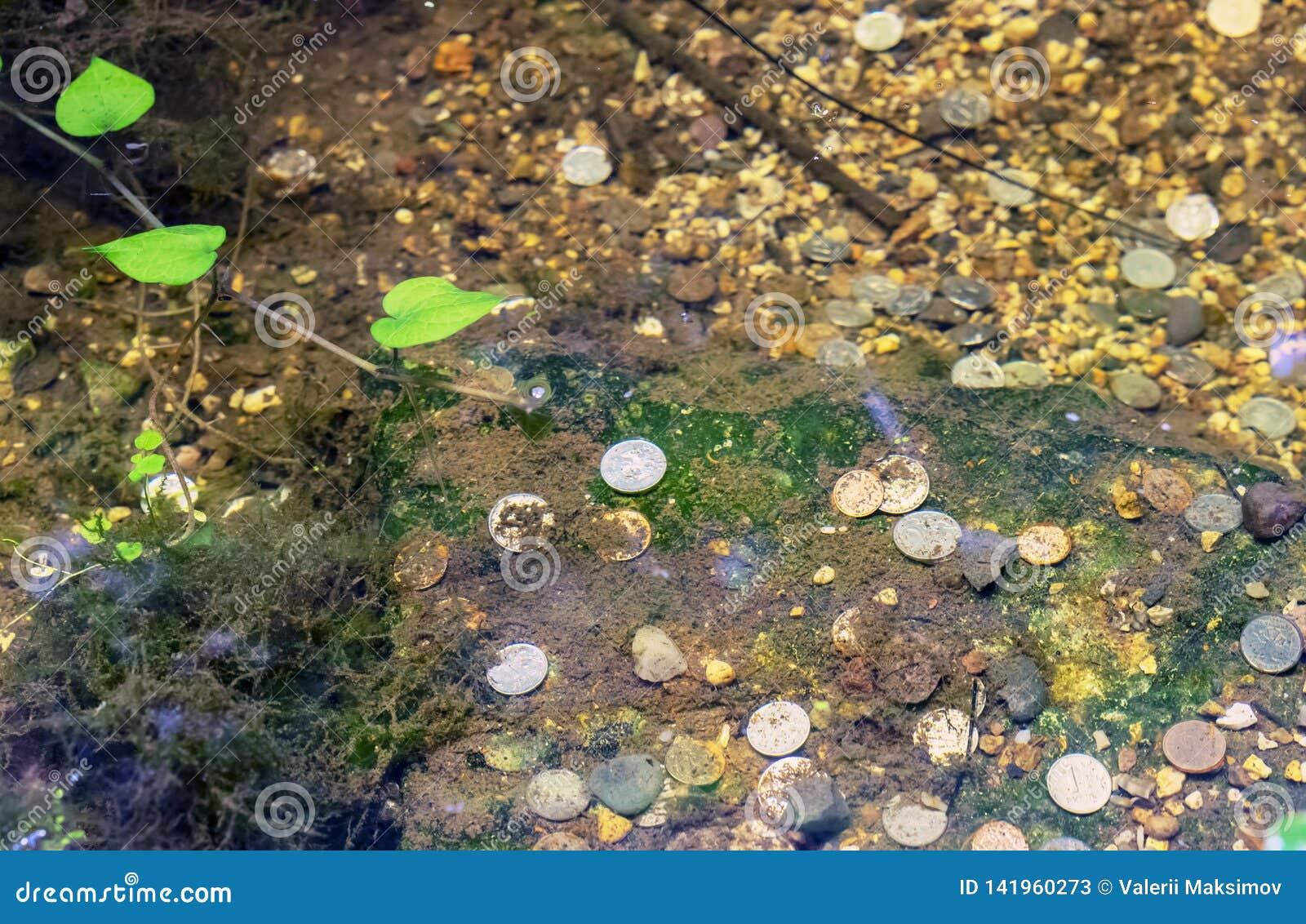 Las monedas mienten en la parte inferior del lago en el parque de la ciudad