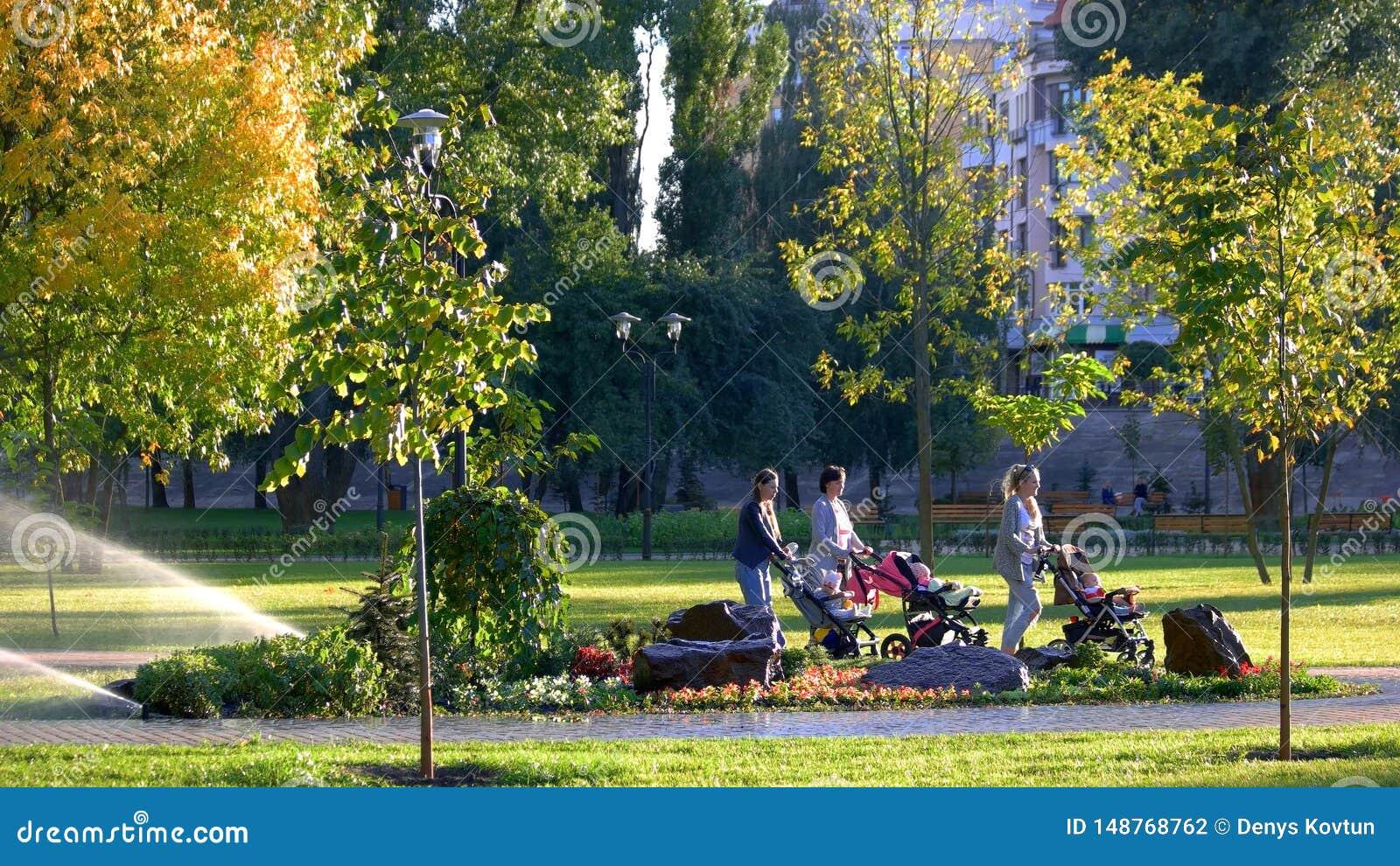 Las mujeres con los carros de beb? est?n caminando en el parque