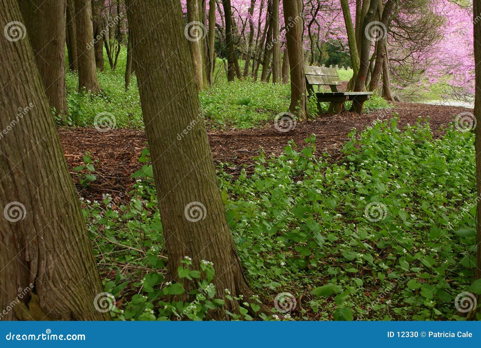 Las na stanowisku badawczym