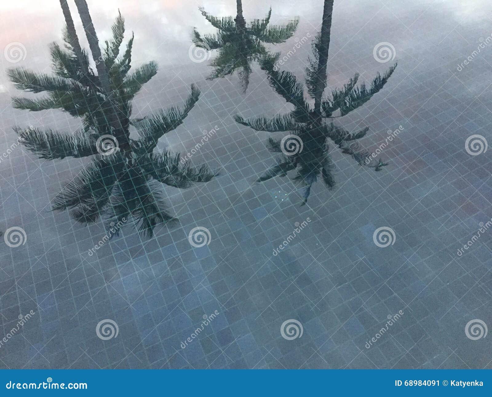 Las palmeras reflejaron en piscina con la teja azul, Tailandia