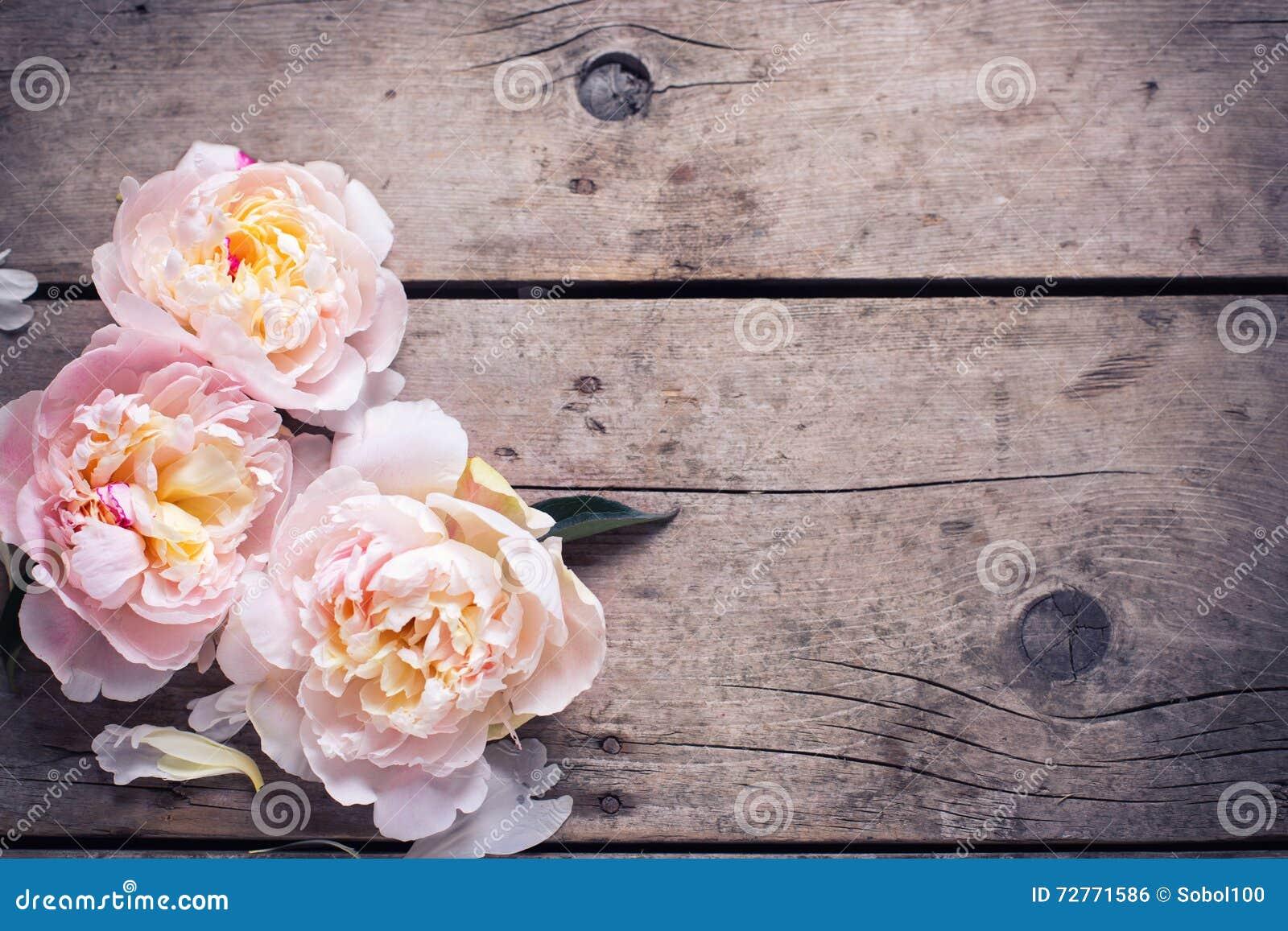 Las peonías rosadas blandas florecen en fondo de madera envejecido Endecha plana