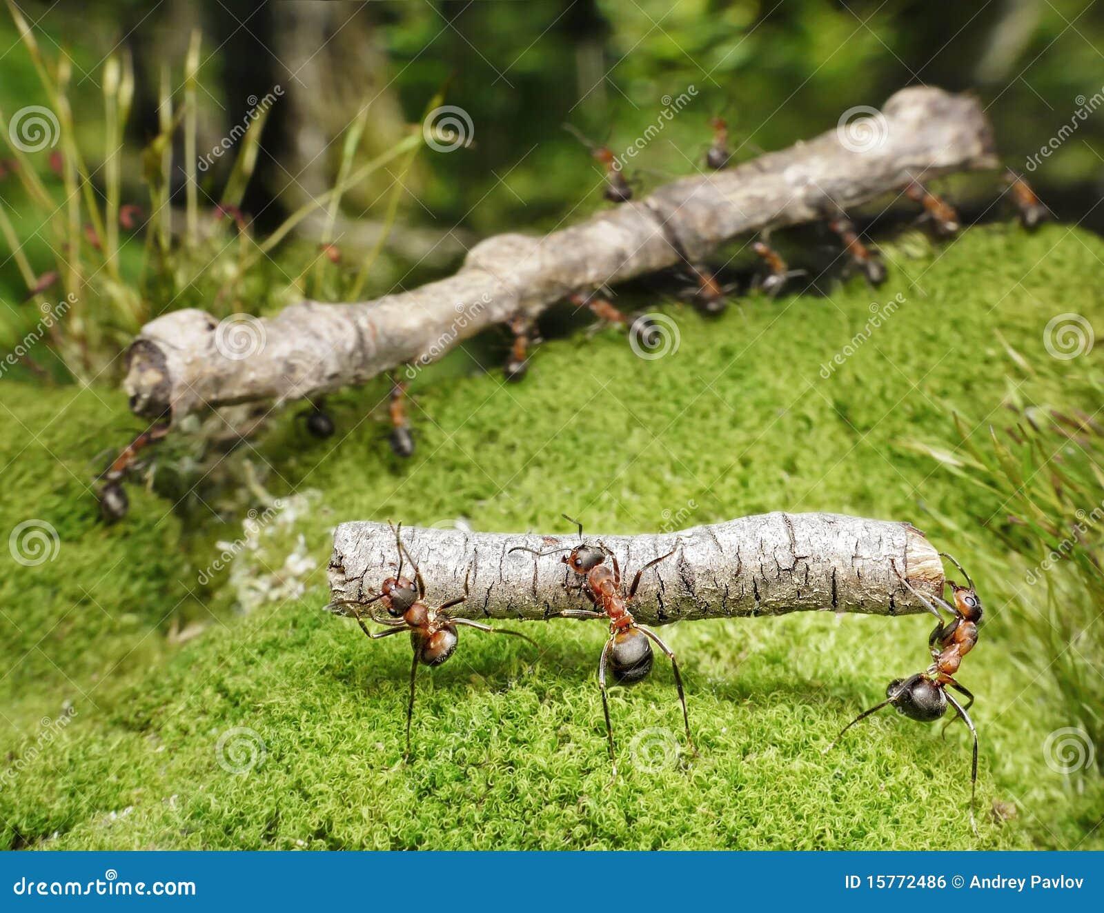 Las personas de hormigas llevan registros