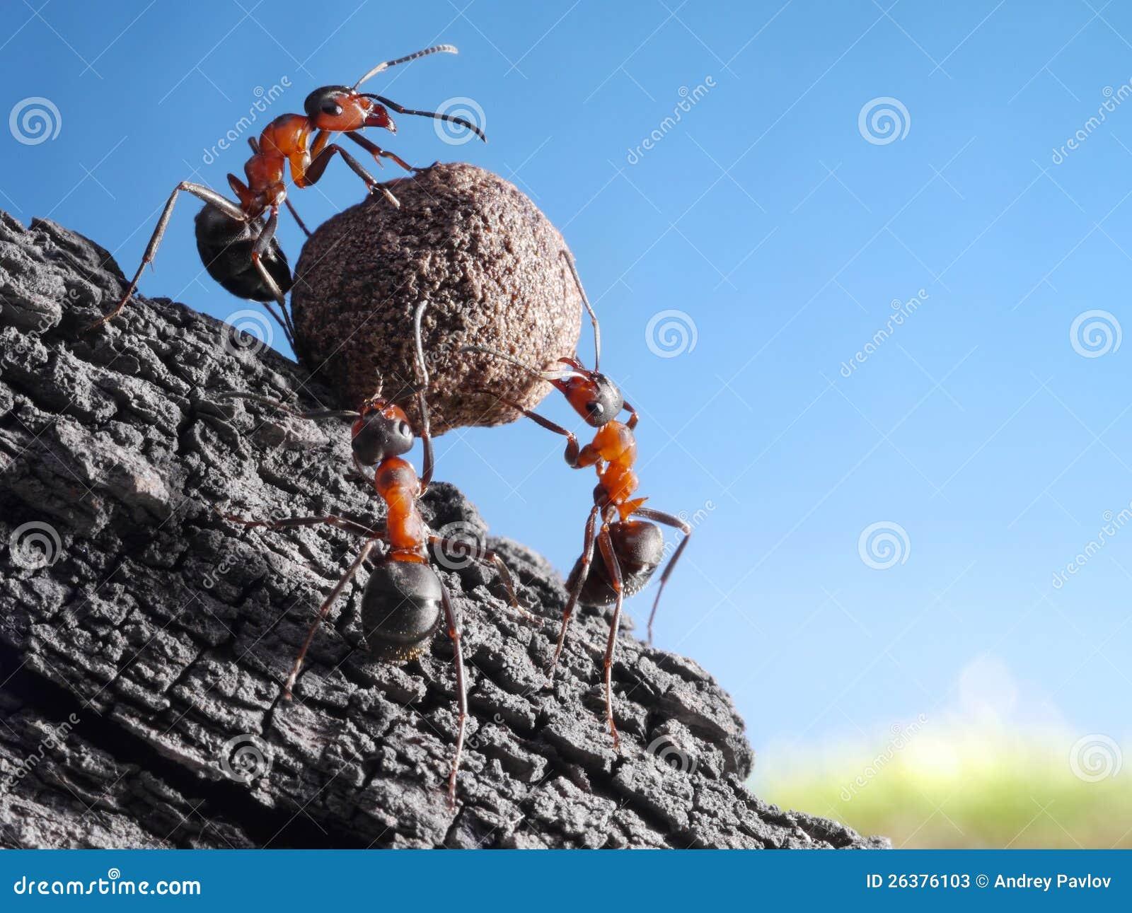 Las personas de hormigas ruedan la piedra cuesta arriba, trabajo en equipo