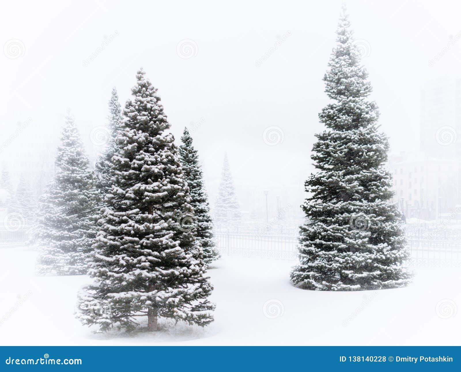 Las piceas verdes jovenes en el parque del invierno se cubren con nieve blanca fresca durante las nevadas