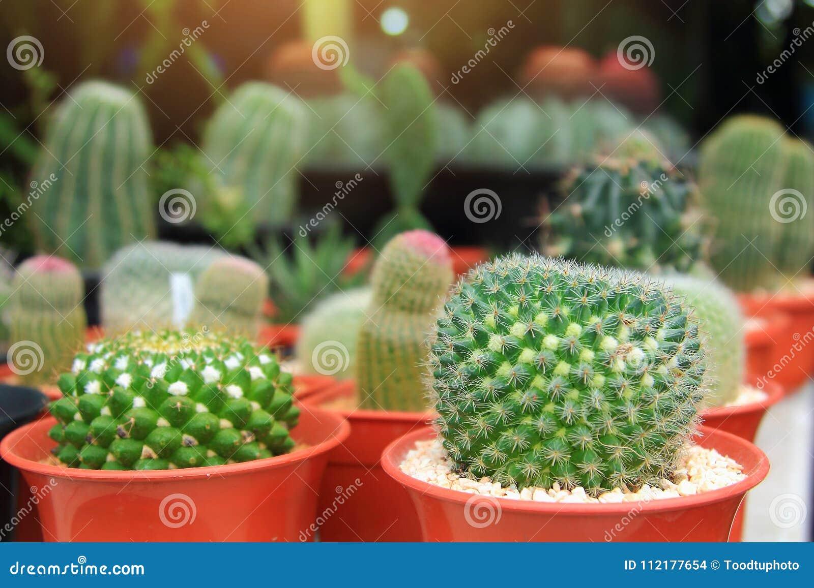 Las plantas ornamentales del cactus en jardinera con el for Plantas decorativas ornamentales