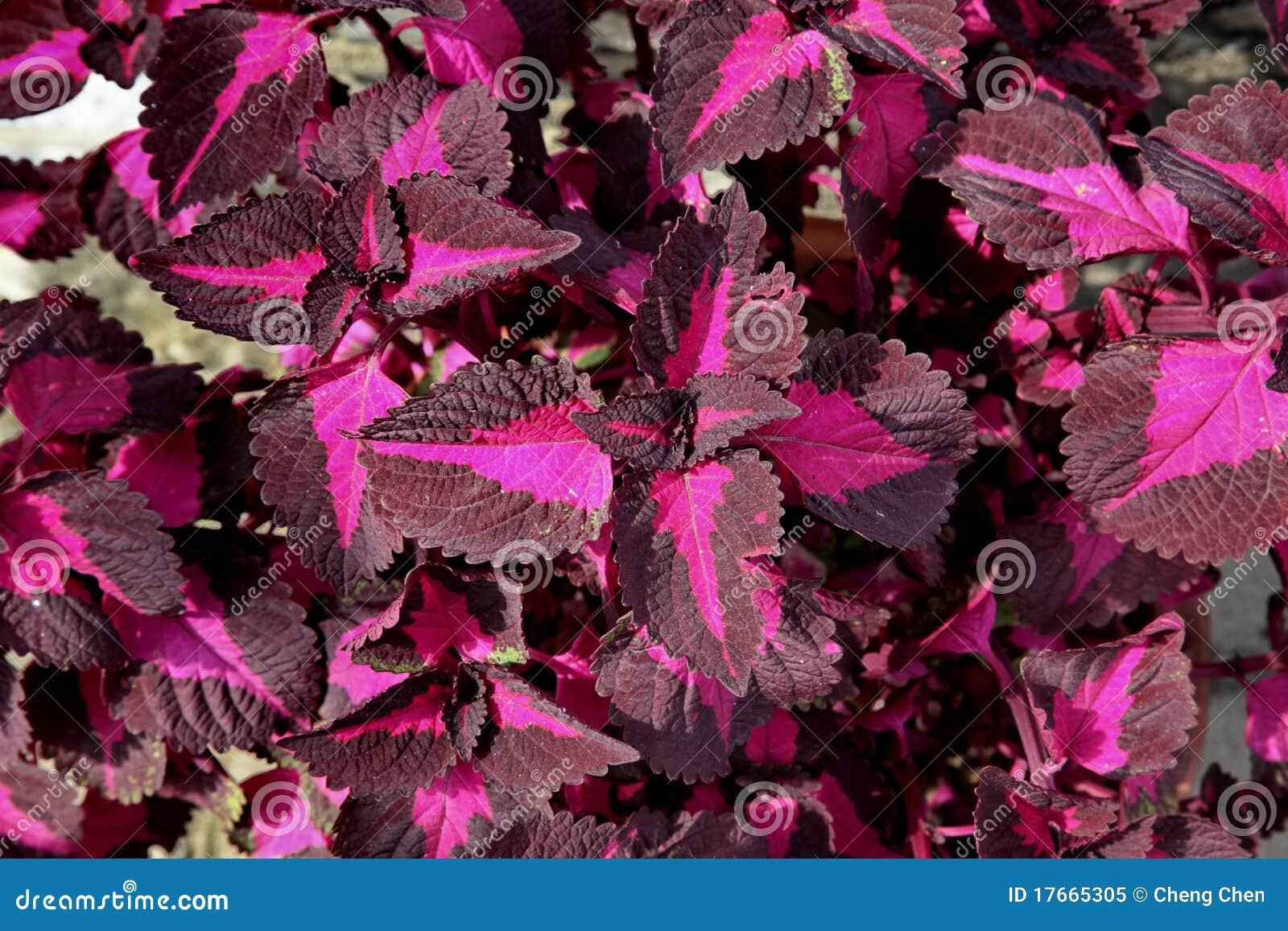 Las plantas ornamentales se calientan foto de archivo for Diseno de plantas ornamentales
