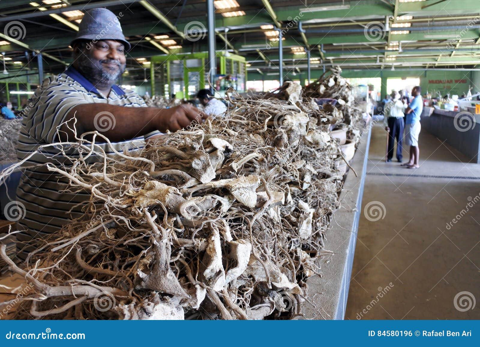 Las raíces de la venta del hombre del Fijian de la planta de la pimienta en el mercado utilizaron a