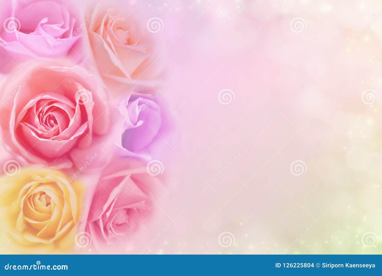 Las Rosas Hermosas Florecen En Filtros De Color Suaves