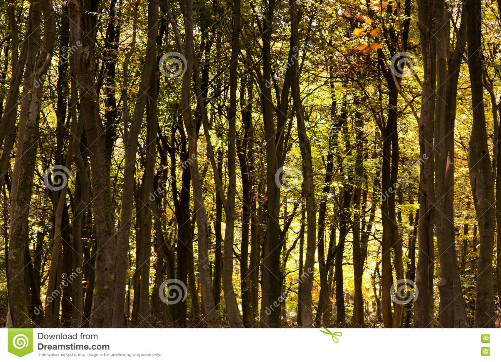 Las scena z żółtymi i brown jesień liśćmi