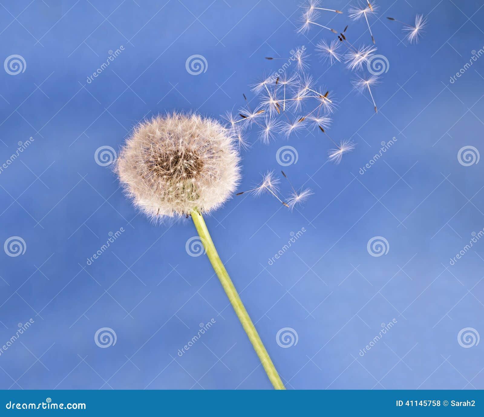 semillas en el aire