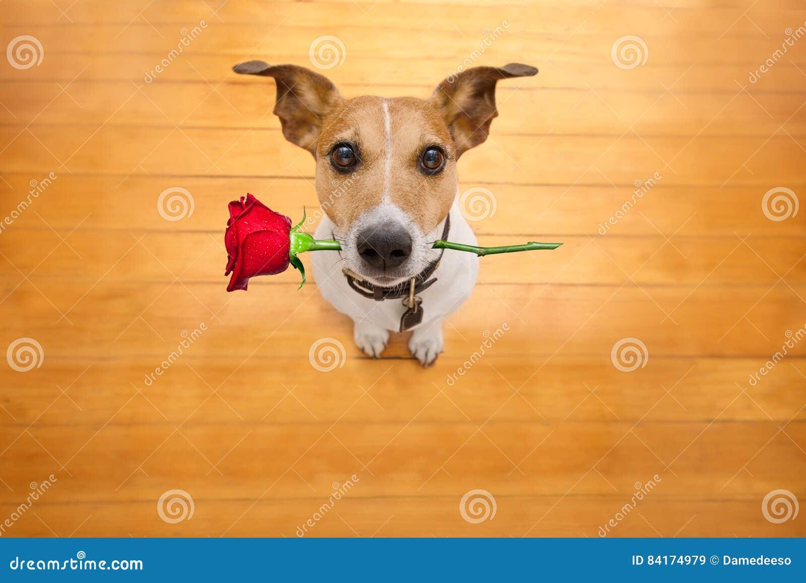 Las tarjetas del día de San Valentín persiguen en amor con subieron en boca