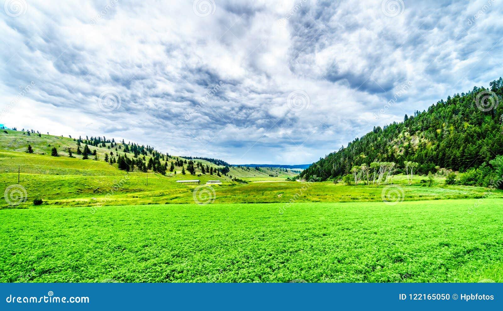Las tierras de labrantío fértiles entre la Rolling Hills a lo largo de la carretera 5A entre Kamloops y Merritt