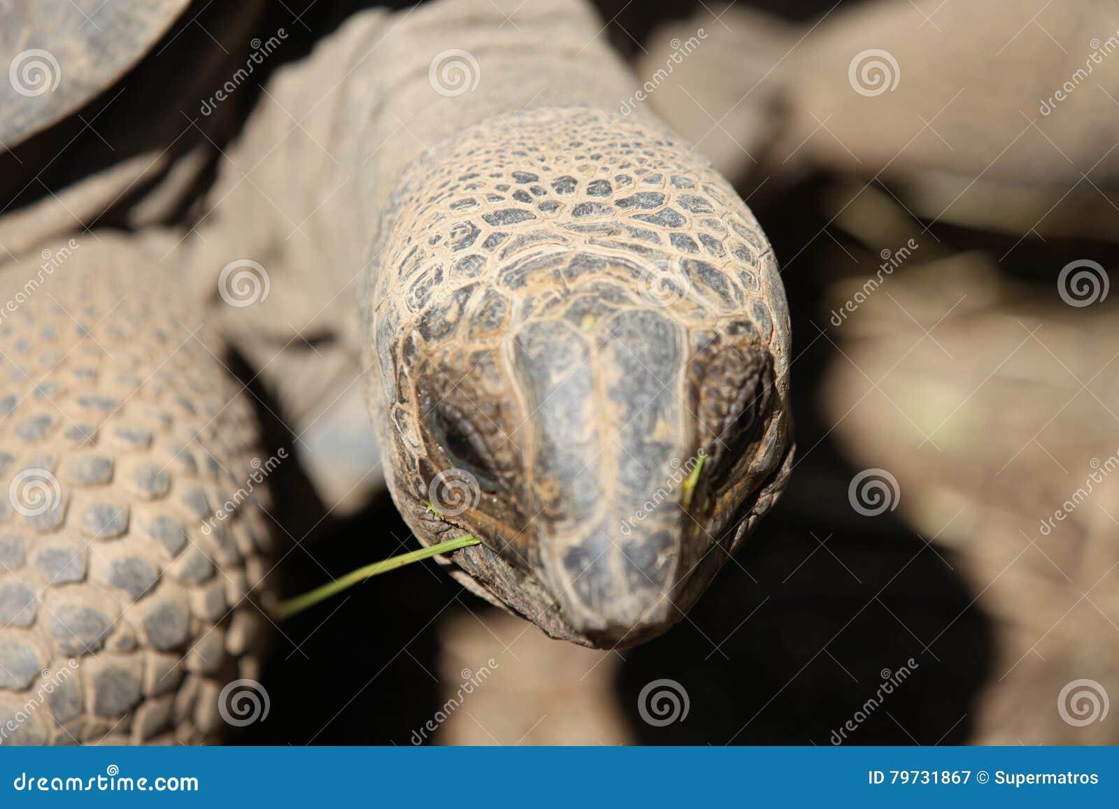 Las tortugas van alrededor su negocio, Tailandia