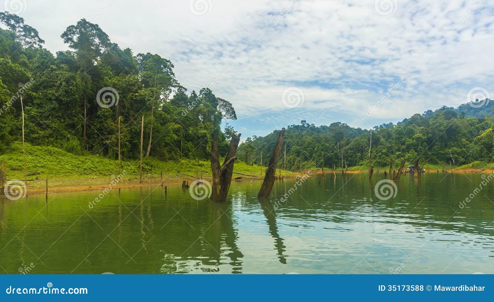 Las tropikalny i nieżywy drzewo