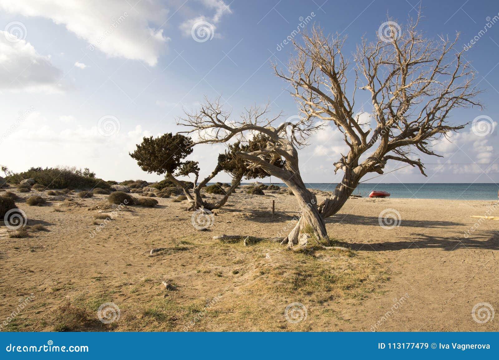 Las vacaciones de verano en Elafonisi varan, esquina al sudoeste de la isla griega Creta