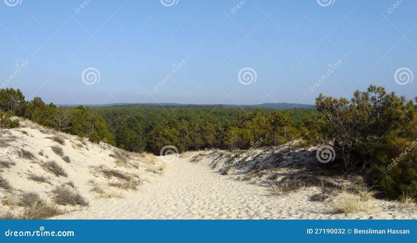 Las w Landes kraju Francja