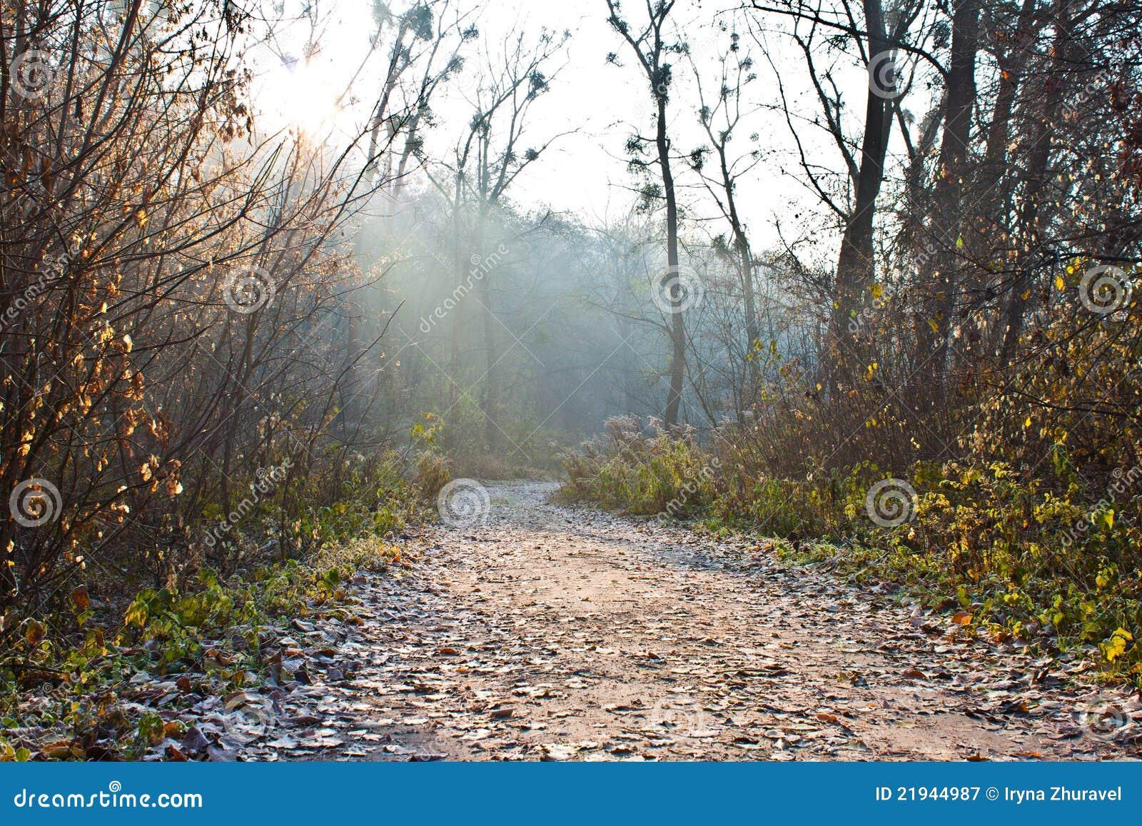 Lasowa droga