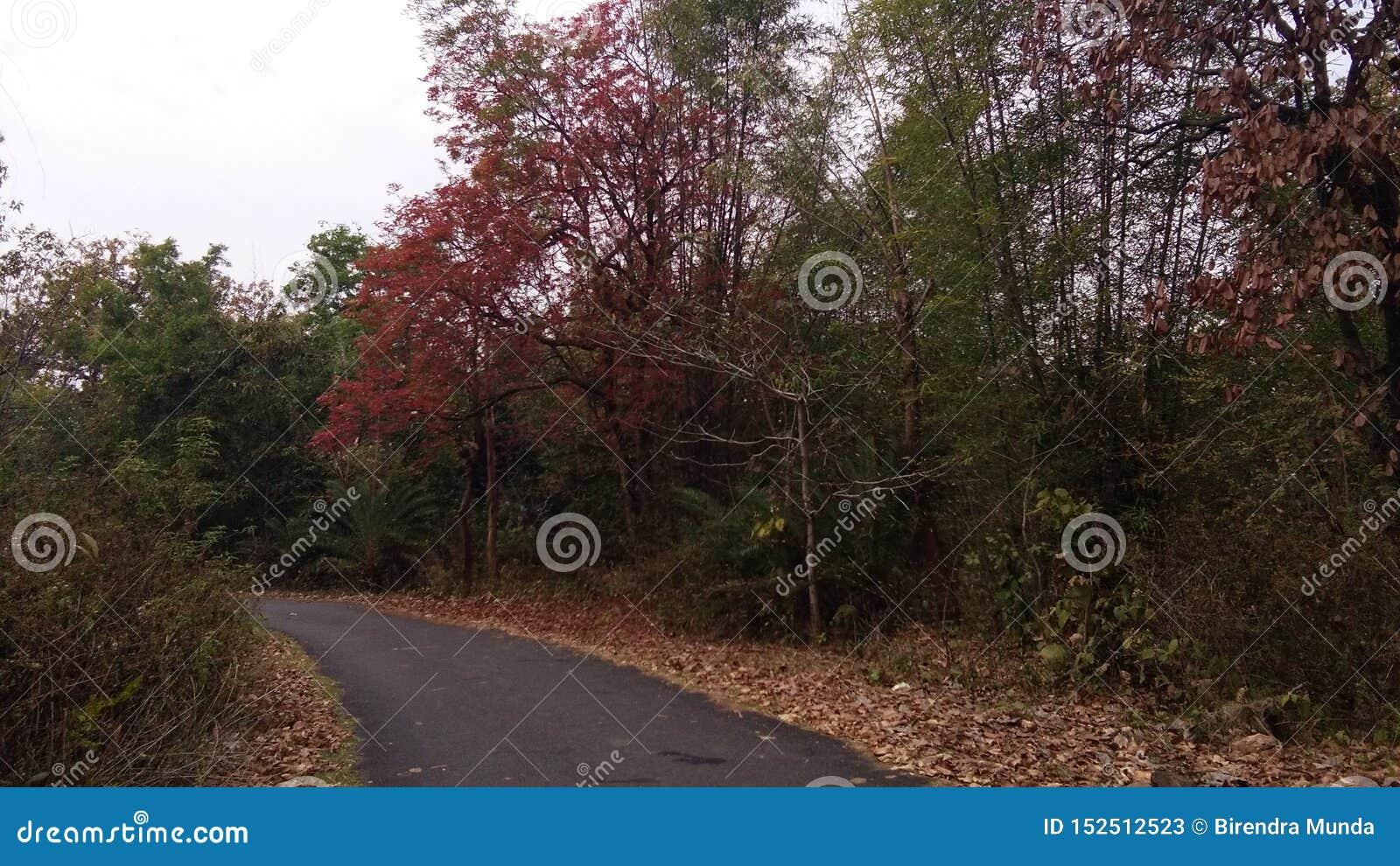 Lasowa droga, dżungla
