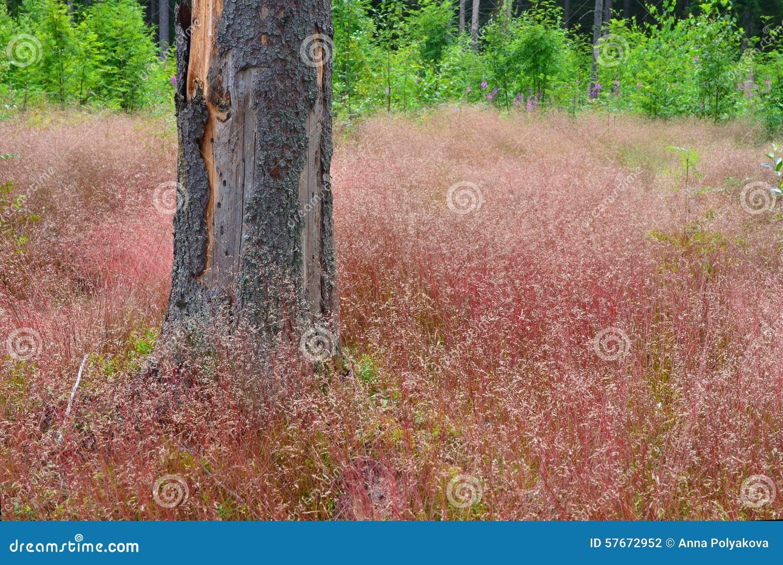 Lasowa Halizna