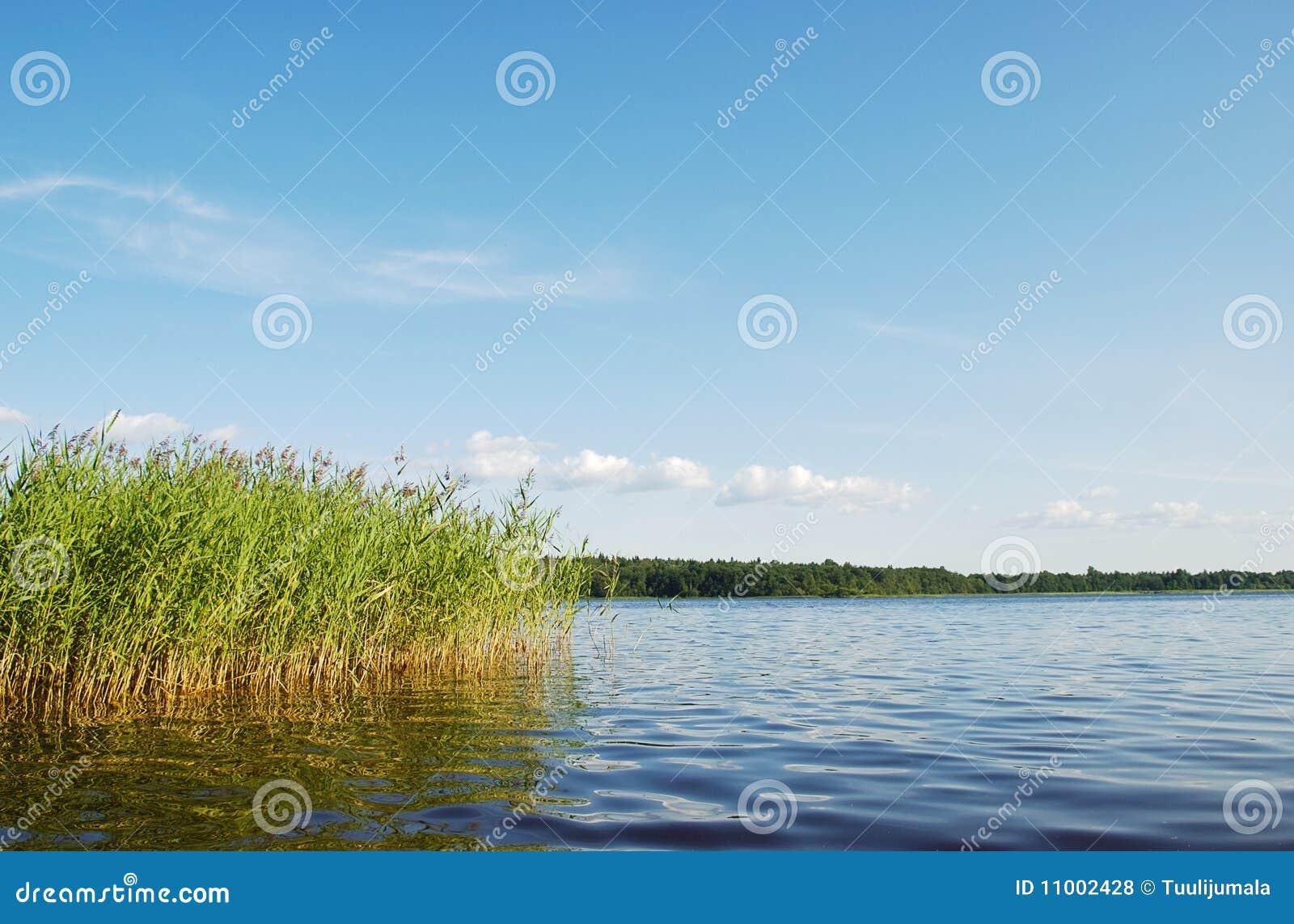 Lasowa jeziorna sceneria