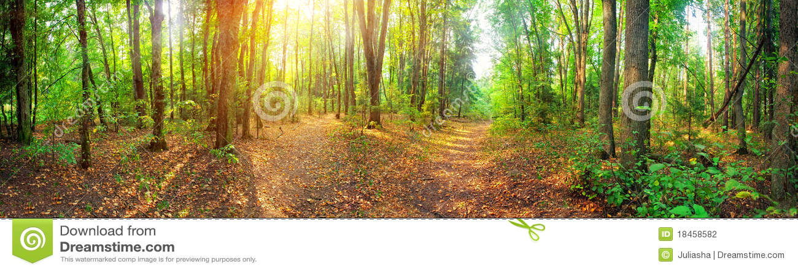 Lasowa panorama