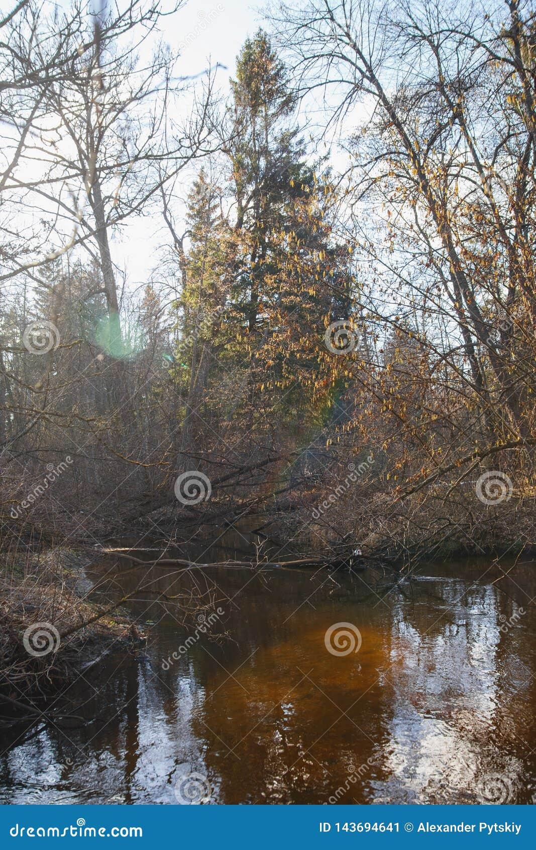 Lasowa rzeka w wczesnej wiośnie przy zmierzchem