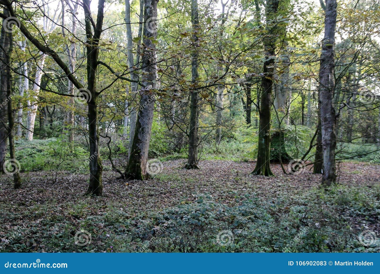 Lasowa scena w Anglia w wiośnie